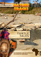 nature tracks - turtle tracks