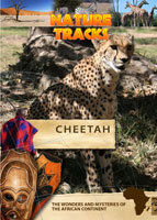 nature tracks - cheetah