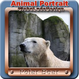 polar bear portrait1