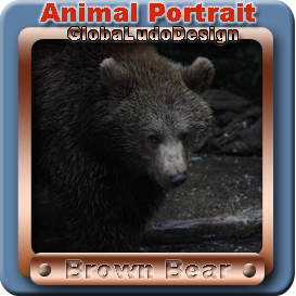 brown bear portrait1