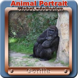 gorilla portrait1