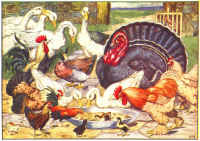 chicken print from 1906 child's animal book