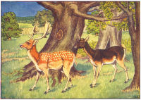 Deer Print from 1906 Child's Animal Book | Photos and Images | Animals