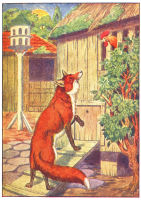 fox print from 1906 child's animal book