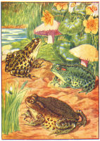 frogs print from 1906 child's animal book