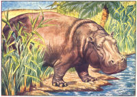 hippo print from 1906 child's animal book