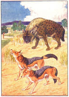 hyena print from 1906 child's animal book