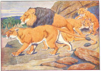 lions print from 1906 child's animal book
