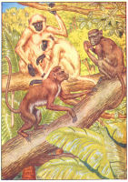 monkey print from 1906 child's animal book