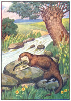 otter print from 1906 child's animal book