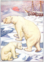 polar bear print from 1906 child's animal book
