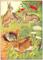 rabbit print from 1906 child's animal book