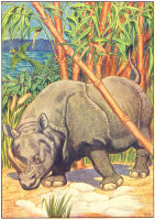 rhino print from 1906 child's animal book