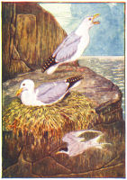 seagull print from 1906 child's animal book