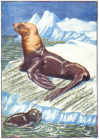 seals print from 1906 child's animal book