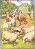 sheep print from 1906 child's animal book