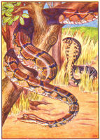 snakes print from 1906 child's animal book