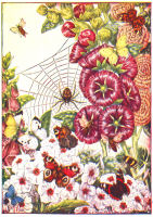 spider print from 1906 child's animal book
