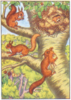 squirel print from 1906 child's animal book