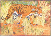 tiger print from 1906 child's animal book