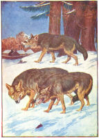 wolf print from 1906 child's animal book