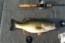 fishing log - oo