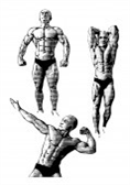 a guide to effective body building.