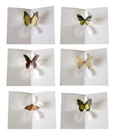 half dozen set 1 - butterfly kisses