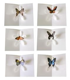 half dozen set2 - butterfly kisses