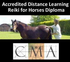 reiki for horses accredited distance learning