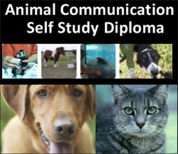 animal communication diploma course