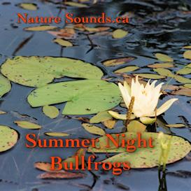 summer night bullfrogs extended version