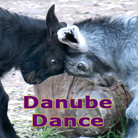 Danube Dance- | Movies and Videos | Music Video