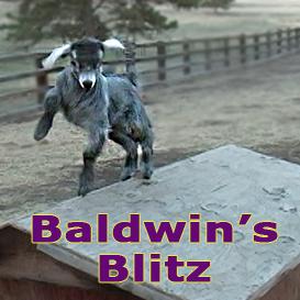 baldwin's blitz-