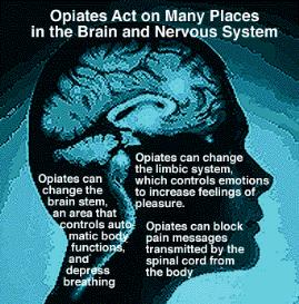 endorphin or morphine = outside stimulation or inside revelation