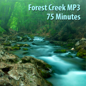 forest creek mp3 (75 minutes)