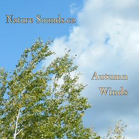 autumn winds - boreal forest