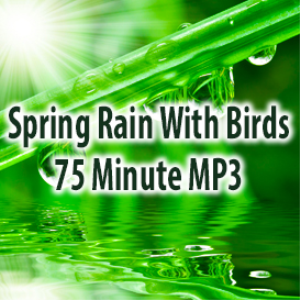 spring rain with birds (75 minutes)