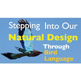 stepping into our natural design w/ bird language