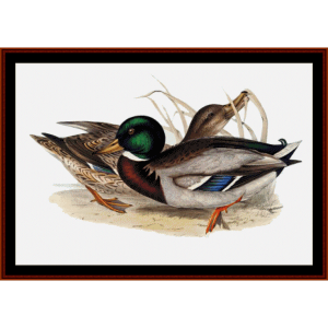 Common Wild Duck - Wildlife cross stitch pattern by Cross Stitch Collectibles | Crafting | Cross-Stitch | Wall Hangings