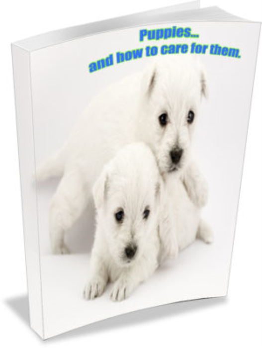 First Additional product image for - Pet care guides big eBook bundle