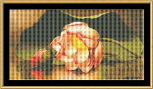 lotus blossoms - heade