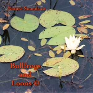 bullfrogs and loons flac file