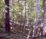 Hermit Thrush Solo | Music | New Age