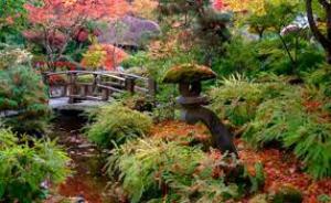 reizo shibamoto enchanted memories
