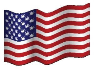 american marijuana leaf starred flag