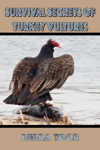 survival secrets of turkey vultures