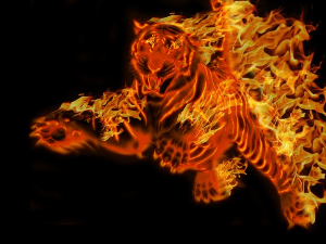 red rover tiger