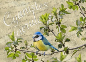 blue tit embroidery background