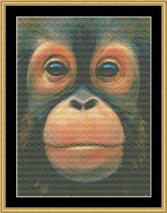 the many faces - baby orangutan